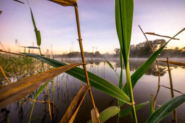 Sunrise on Jells Lake
