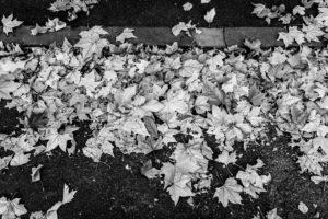 Leaves Leaving The Tree